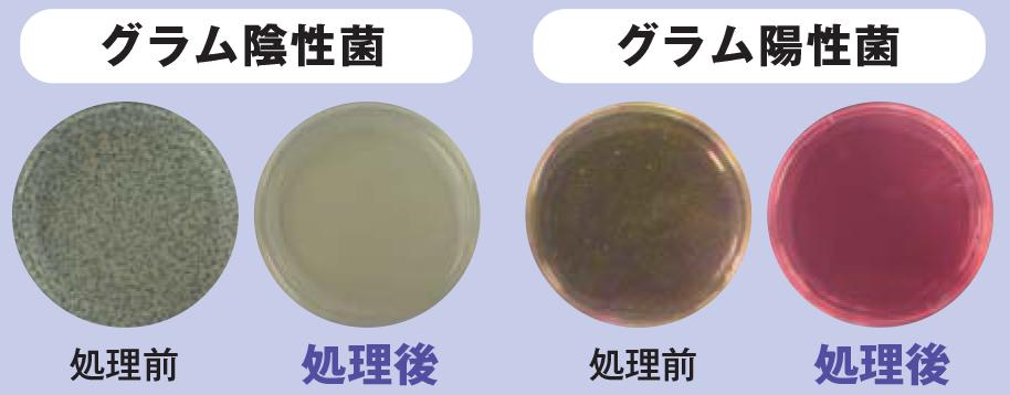 除菌力検査
